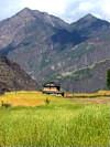 west-nepal-farm-100x133