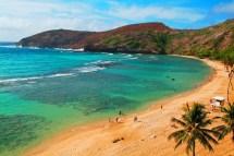 5 In Oahu Hawaii Wayfaring Kiwi