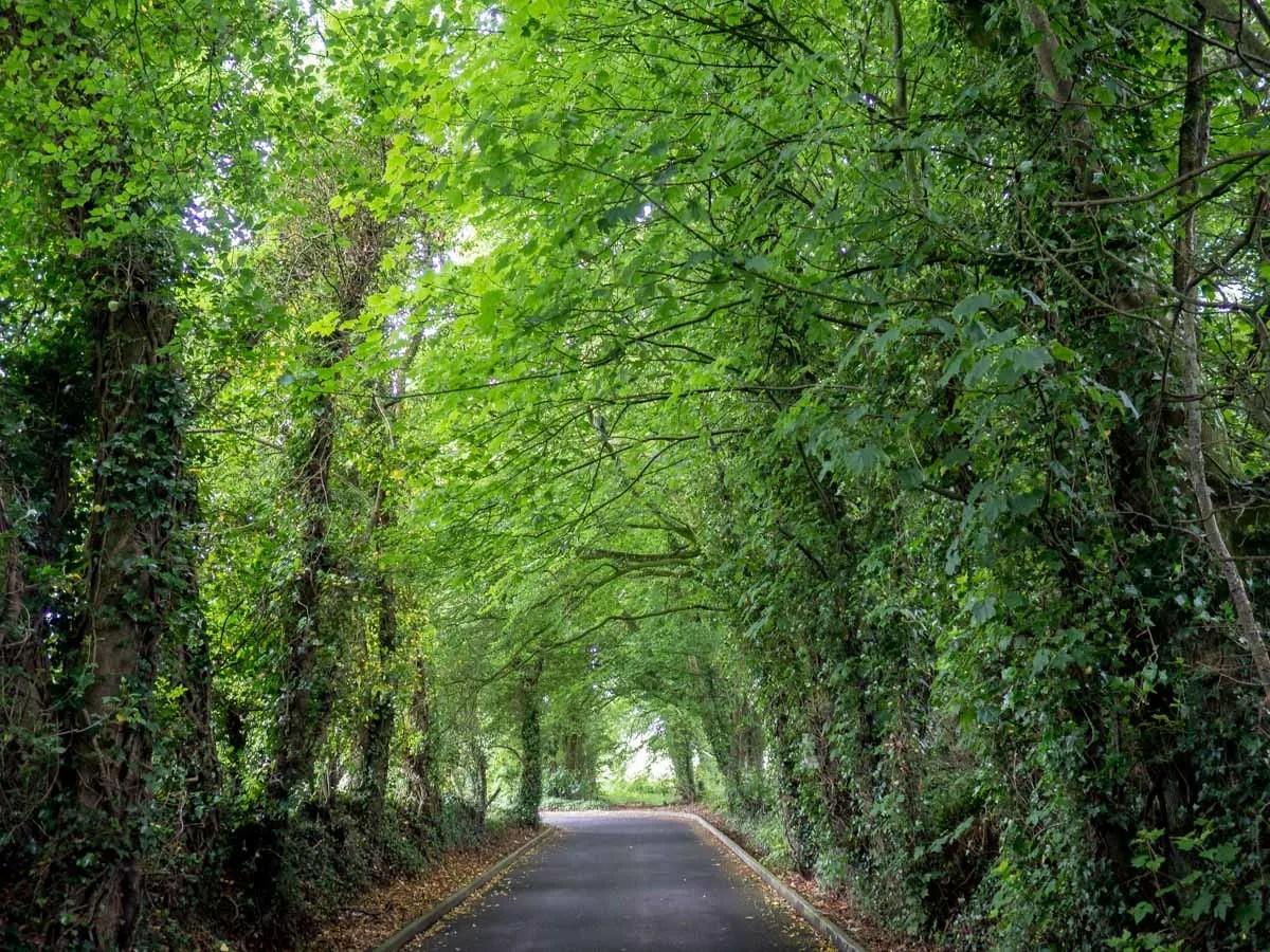Dark Hedges via Belfast to Antrim Coast