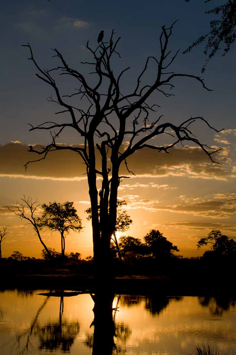 Travel Magic in a Hwange Sunset