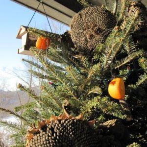 Create a Christmas Tree Birdfeeder