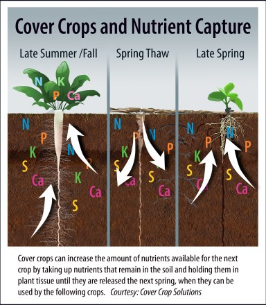 cover_crop2