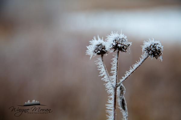 Hoar Frost Eagan Minnesota Morning