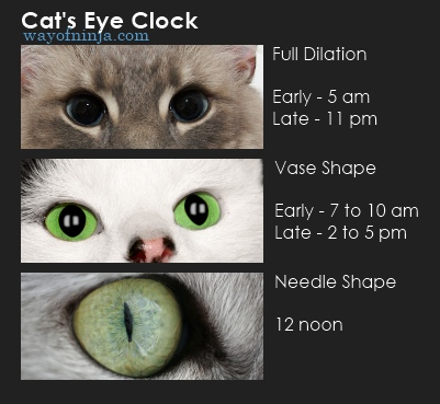 Cats Eyes Shape Time