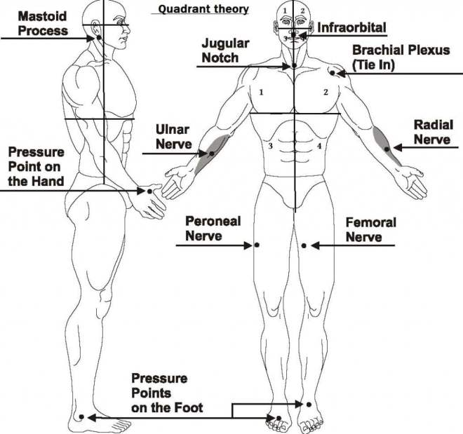 Pressure points for combat tenketsu jutsu way of ninja illustration of tenketsu quadrants ccuart Images