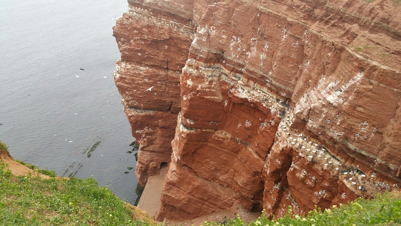Alt img Felswand Helgoland mit Vogelkolonie
