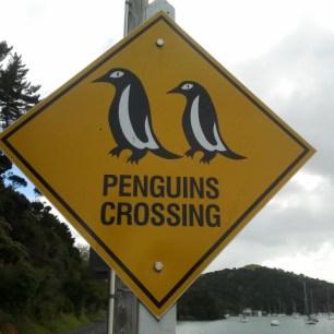 Pancarte NZ