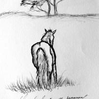 croquis-paihia-cheval_repos1