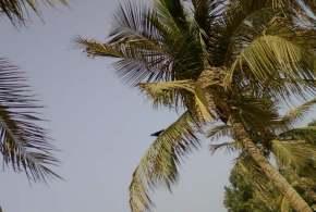 palm tree beach dubai