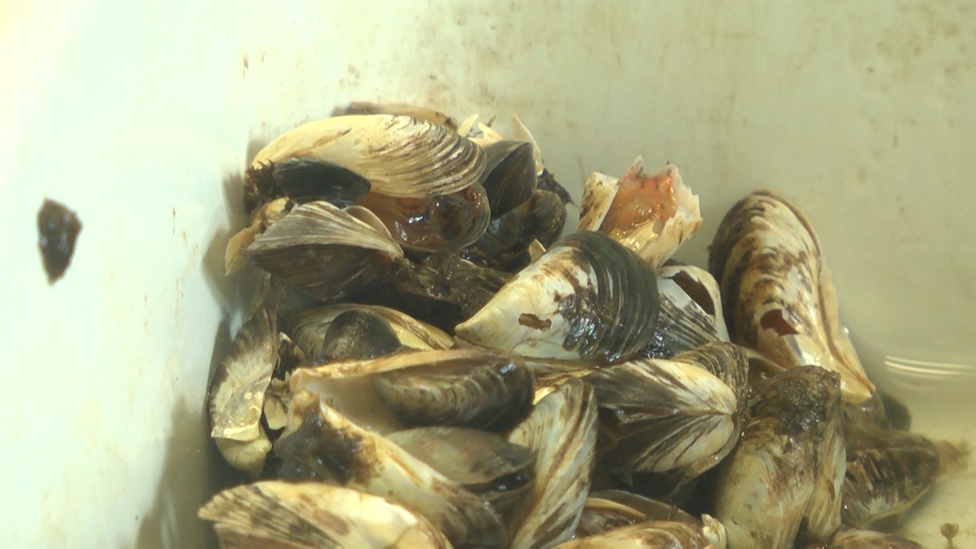 Scientists Study Invasive Species To Track Chemical