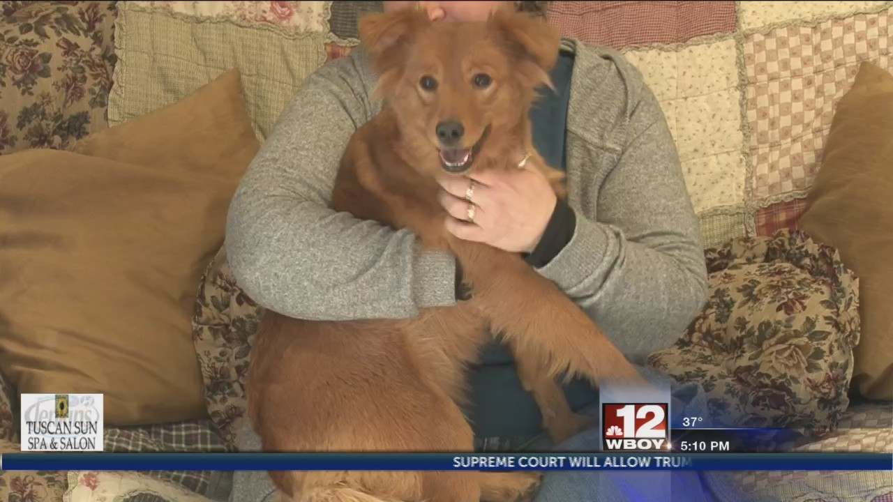 Marion County dogs closer to a 'Forever Home' after living in locked up trailer