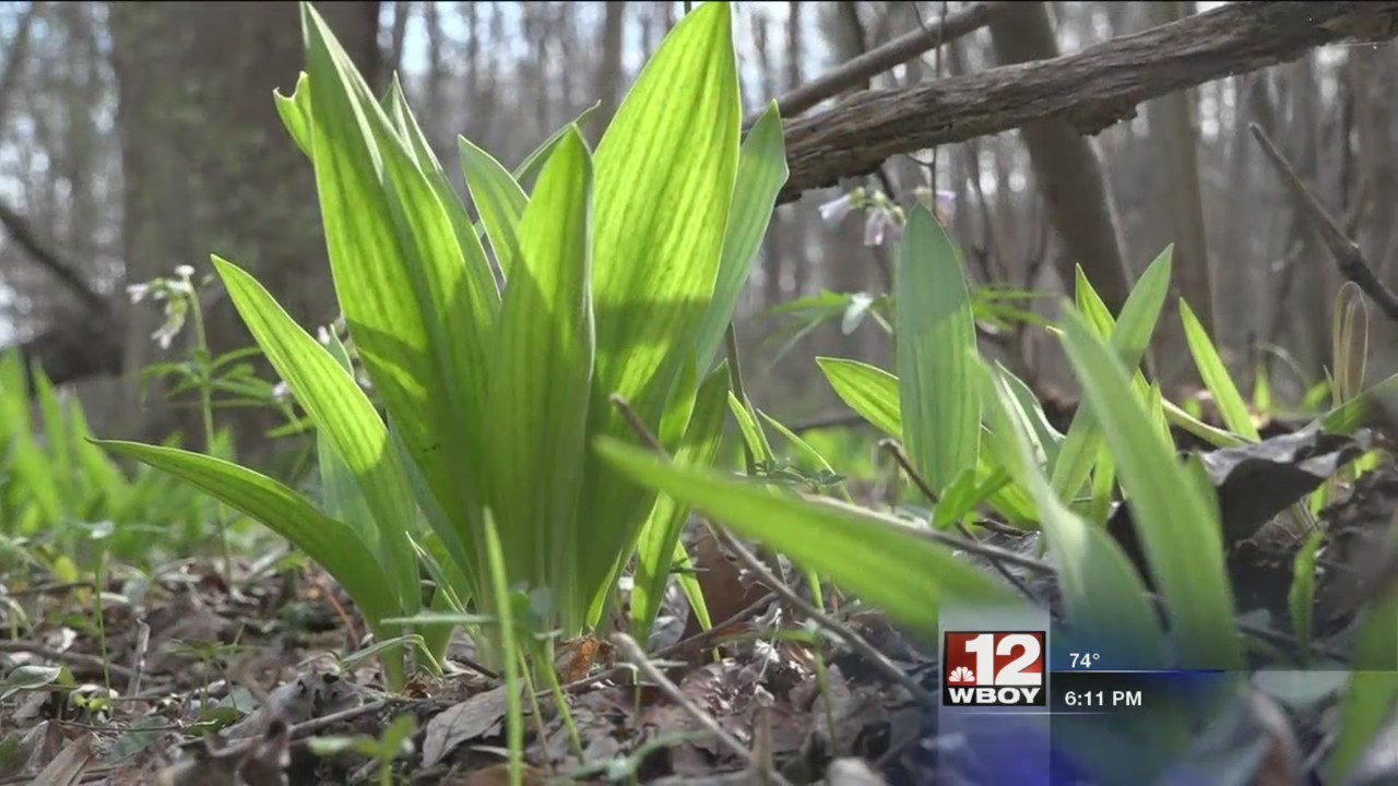 Spring ramps up across the Mountain State