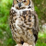 Cautiousness - Thinkers - Owls