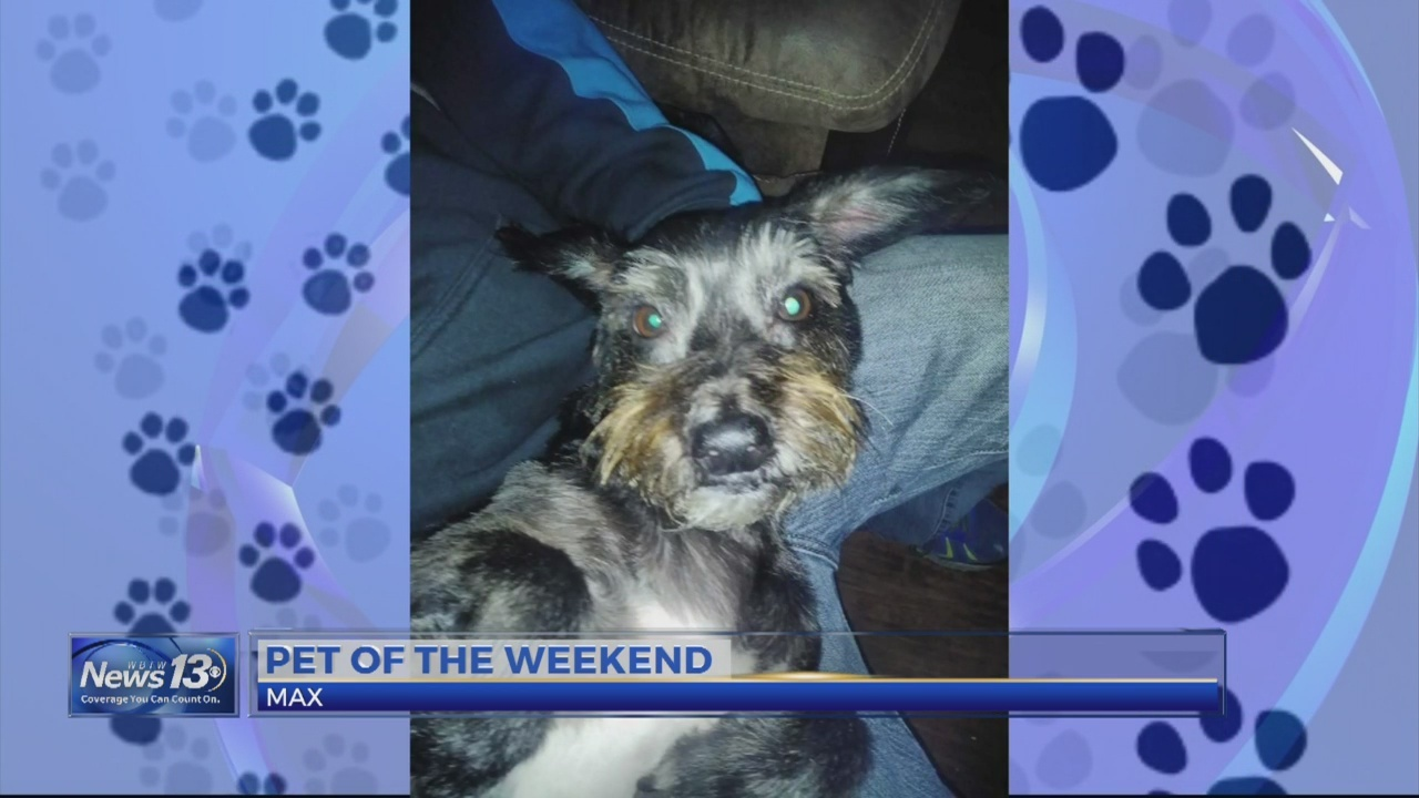 Pet of the Weekend: Max