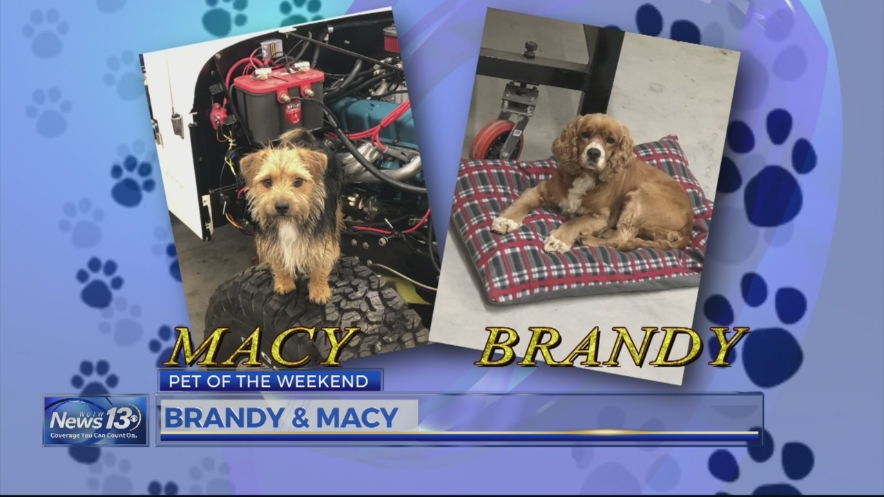 Pet of the Weekend Macy & Brandy