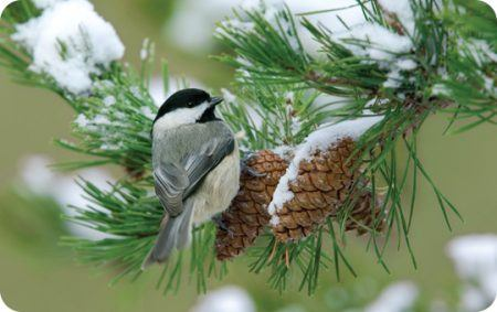 Fall Bird Feeder Wallpaper Winter Wild Birds Unlimited Wild Birds Unlimited