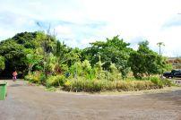 7_14_18 entrance garden wide