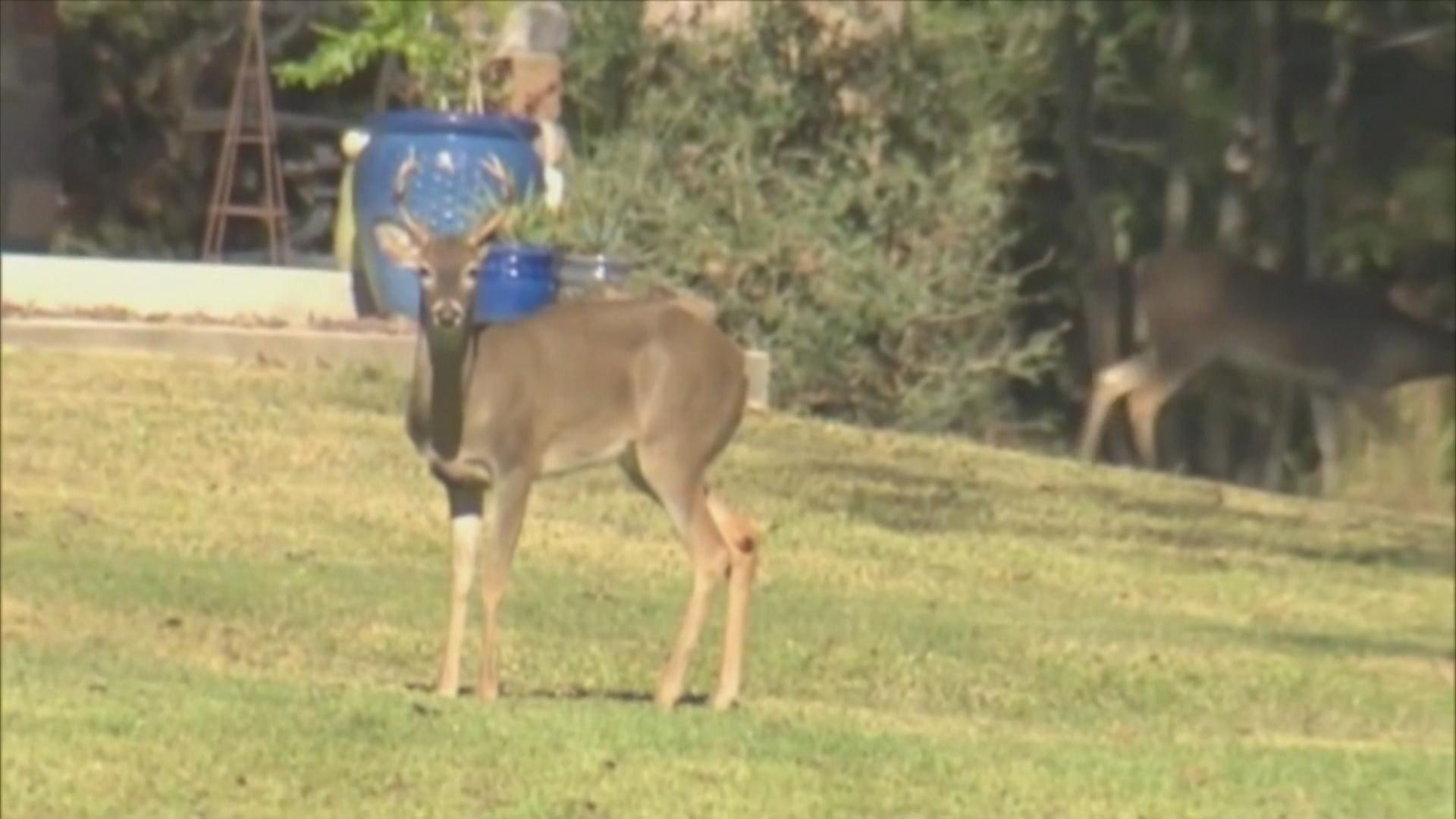deer season_1510860934578.jpg