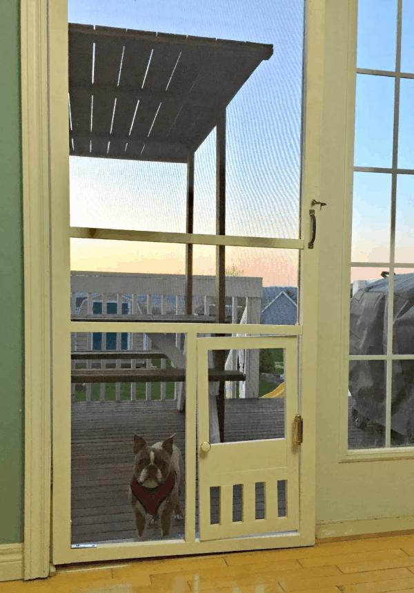 homemade dog door plans you can diy easily