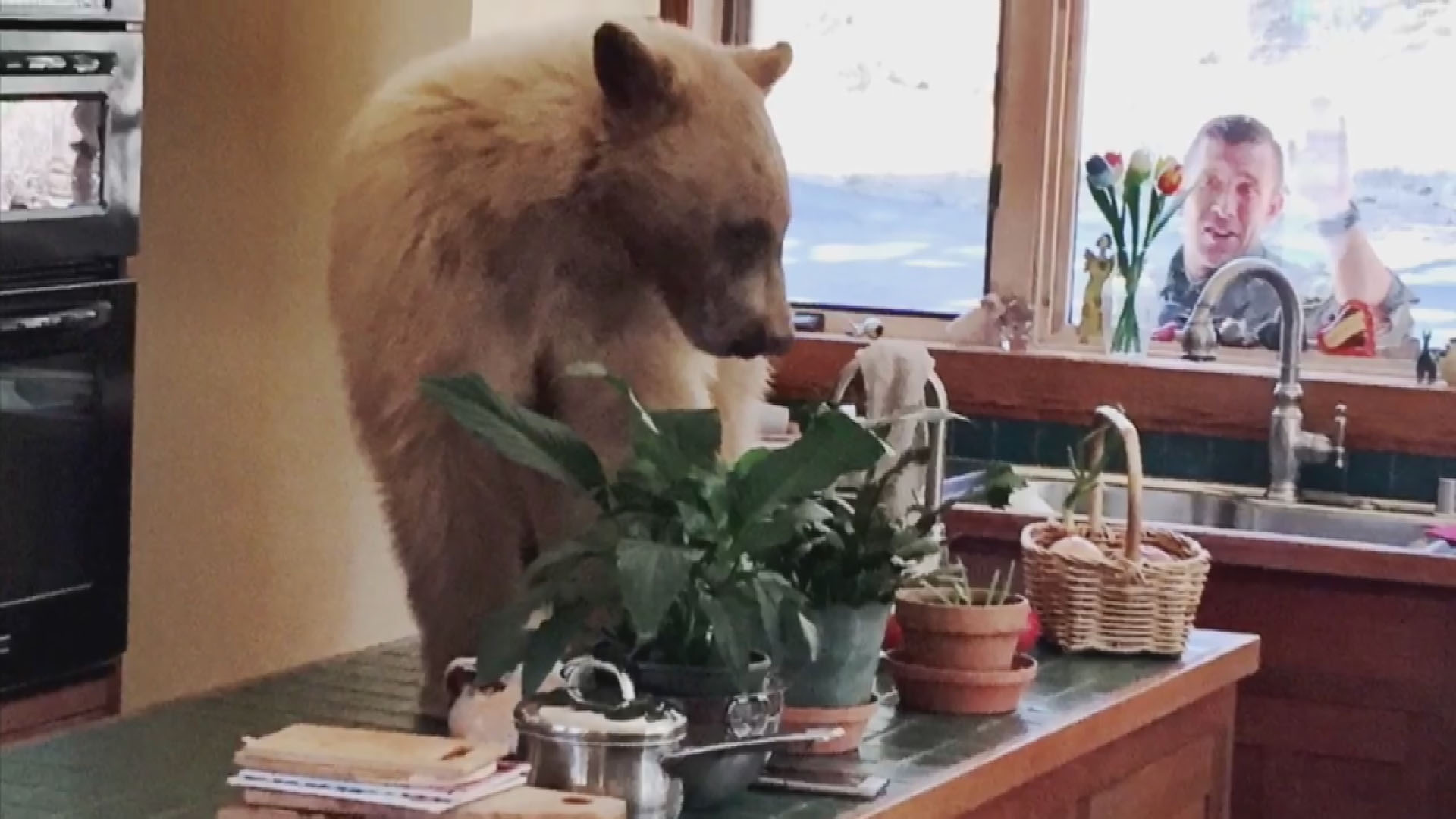 bear breaks into tahoe home_1525445652259.jpg-846653543.jpg