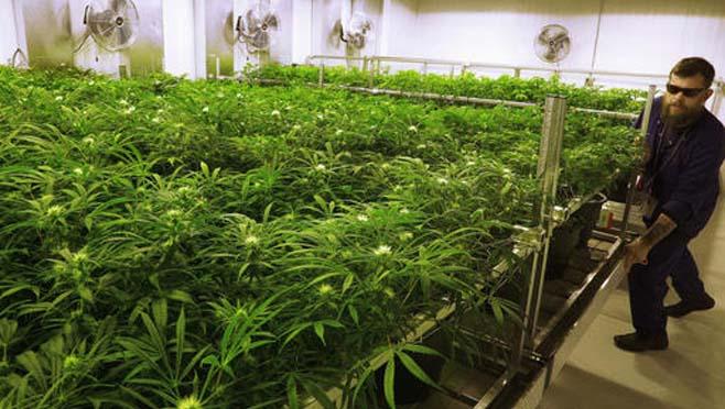 Medical Marijuana Ohio_197140