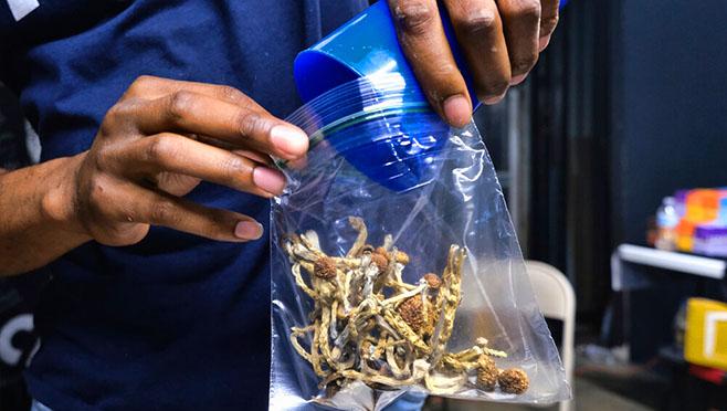 magic mushrooms_1559759669379.jpg.jpg