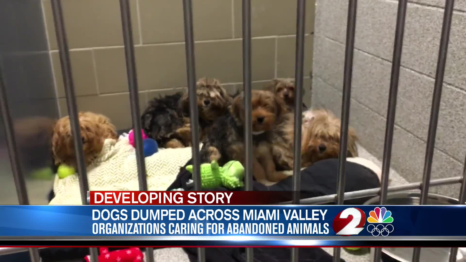 Dogs dumped across Miami Valley