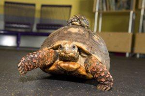 Tortoise profile picture
