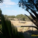 Wild-Africa-Trek-wdwradio-820