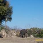 Wild-Africa-Trek-wdwradio-872