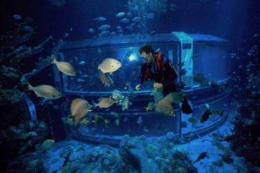 seas - disney