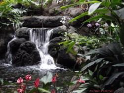 polynesian resort lobby - kf