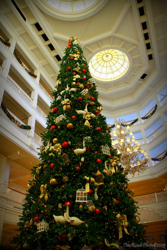 tree 2 standing five stories the christmas tree at disneys grand floridian resort dominates the lobby and is probably a favorite of most guests - Disney Christmas Trees