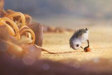 Piper Finding Dory Pixar Short