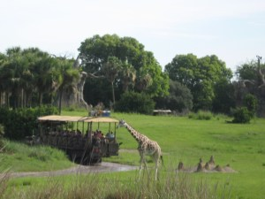 walt disney world attractions - kilimanjaro safaris