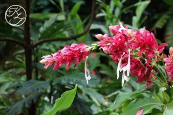 botanical-gardens2-kf