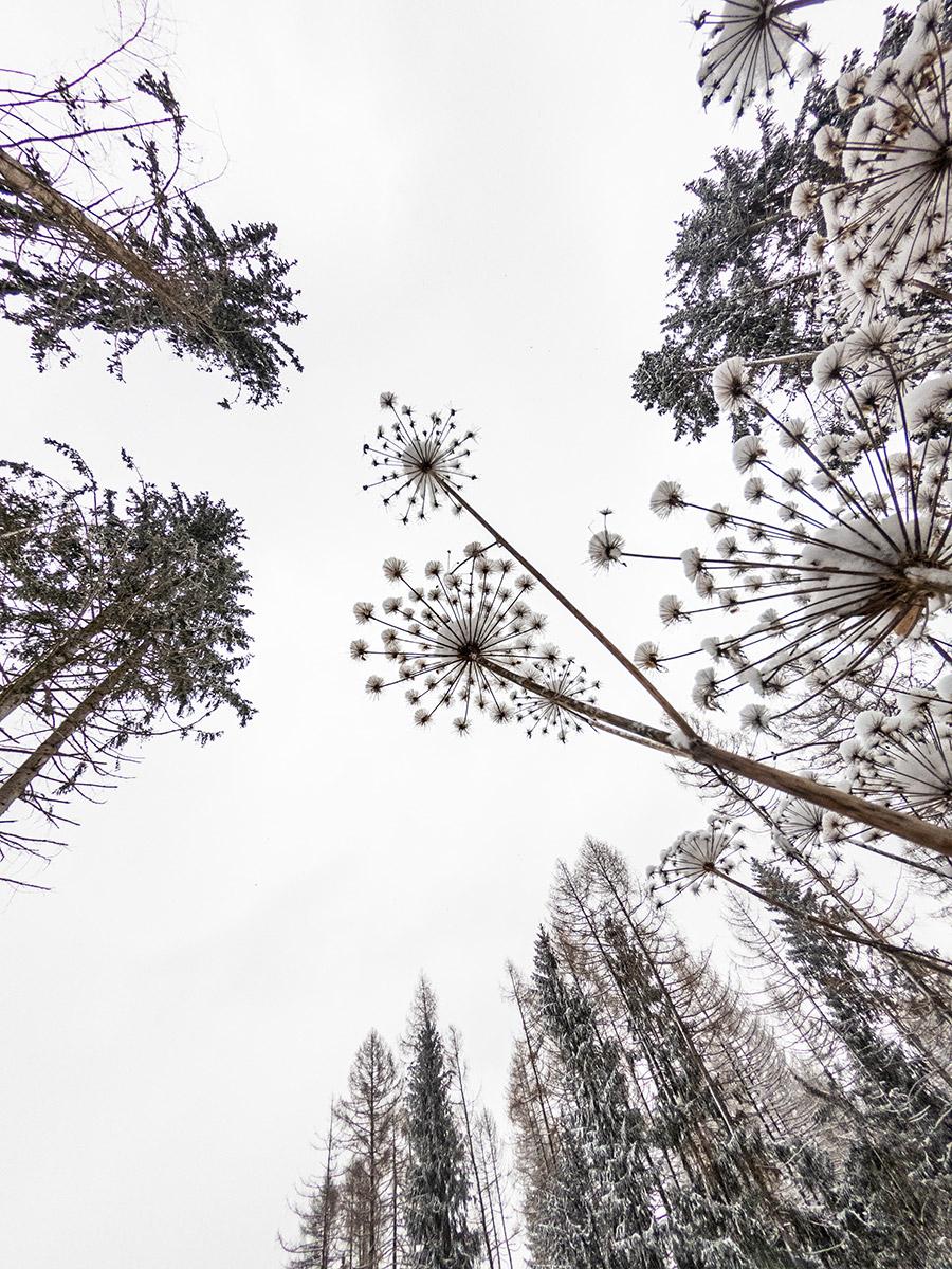 Bäume und Pflanzen
