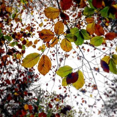 Blätterdach im Herbst