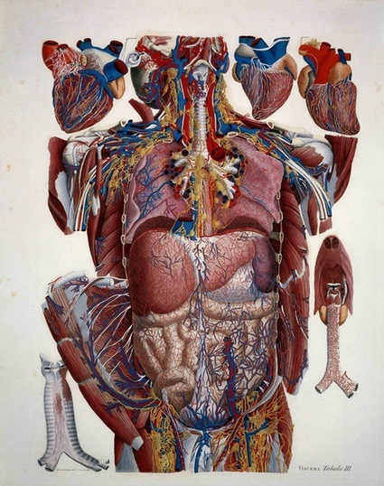 1339461_com_anatomical.jpg