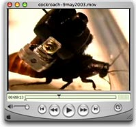 cockroach-9may2003-video.jpg