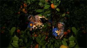 0fffruits.jpg