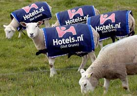 Sheep Advertising