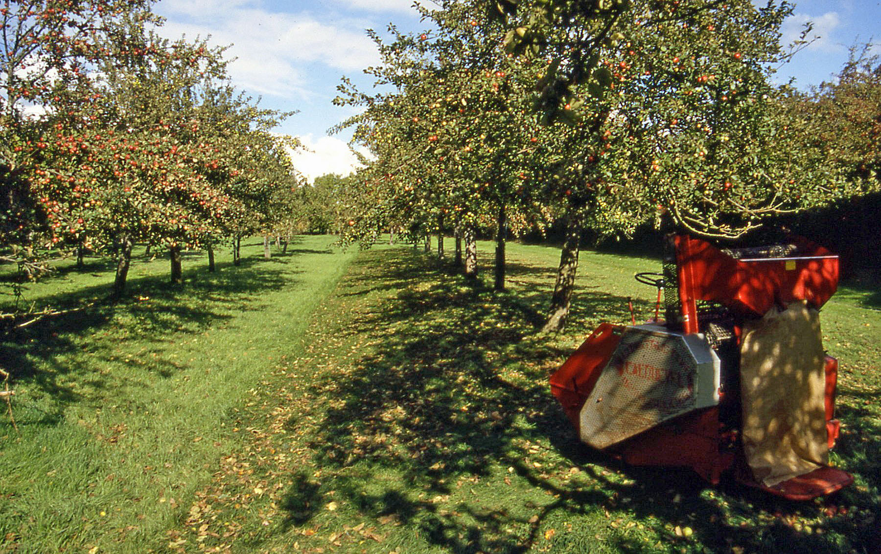 Fall Apples Wallpaper A Changing Climate For Cider Weadapt