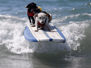 GOLDMAN SACHS: Welcome to the 'third wave' of the financial crisis