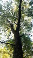 tree top challenges