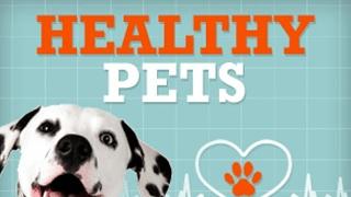 healthy-pets_1429727493902-22965514-22965514.png