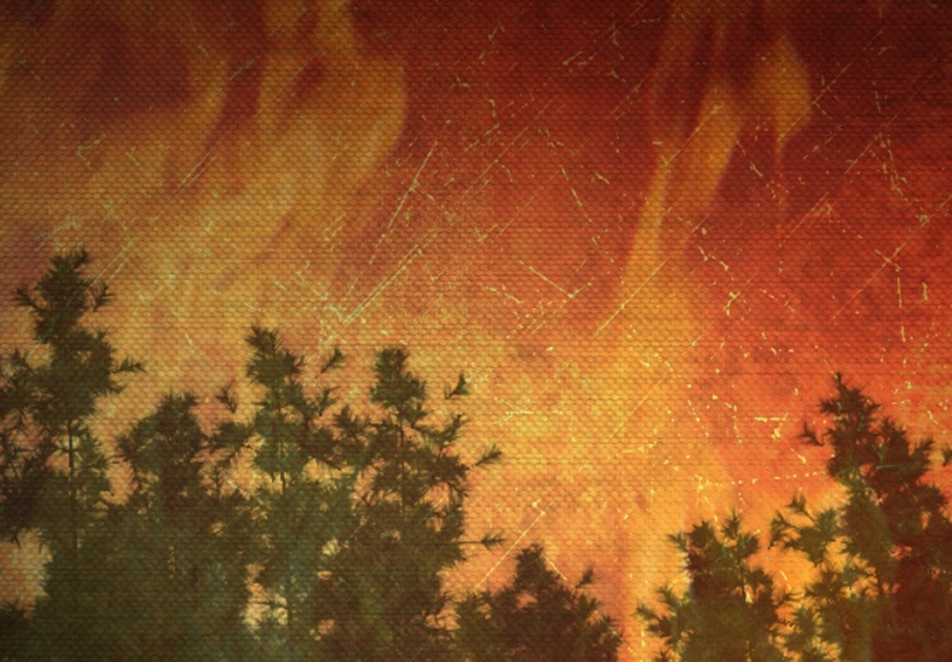 fire in woods_1525242256056.jpg.jpg