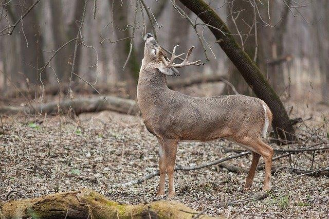 Pa  Game Commission votes to change the start of deer rifle