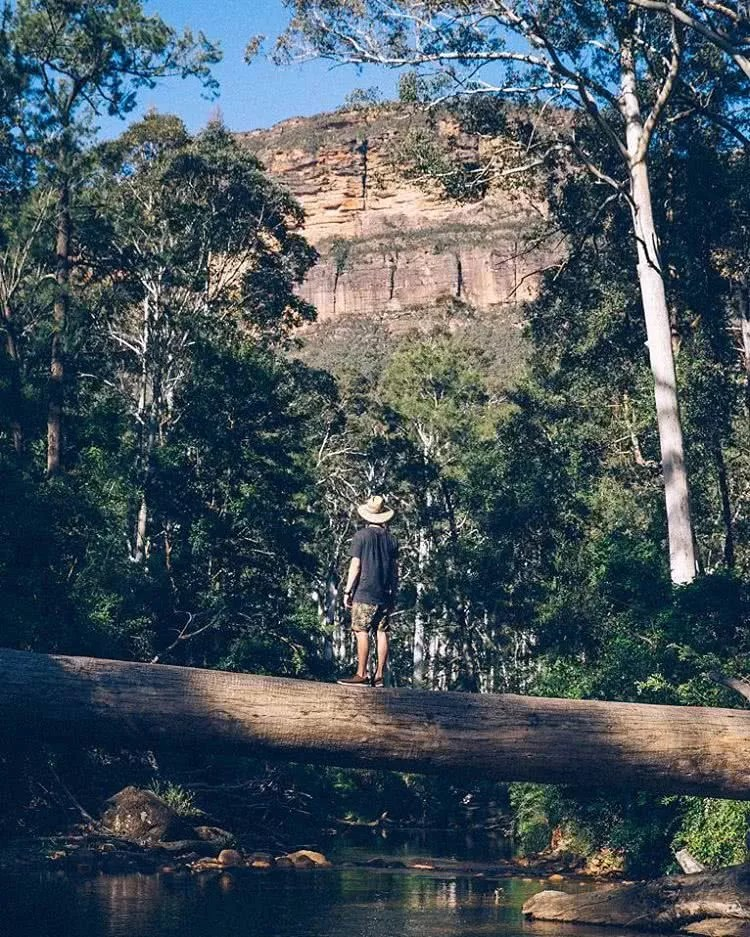 Exploring the enchanted and slightly snakey Blue Gum Forest withhellip