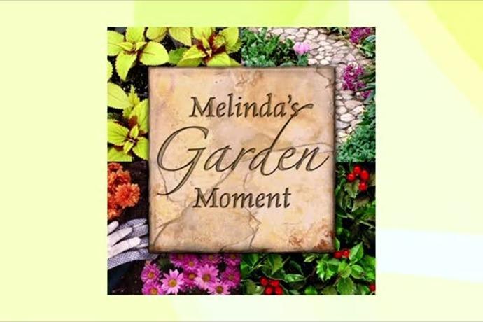 Garden Moment_-7143870362756821596